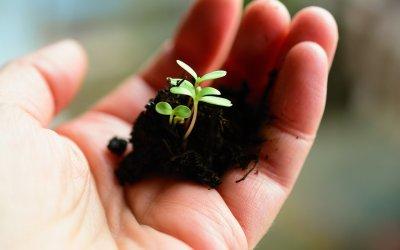 Výsev semínek