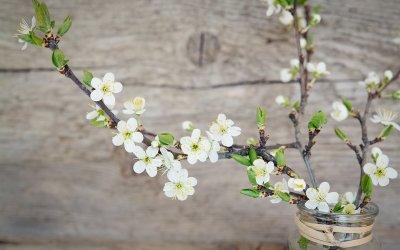 Jarní větve do vázy