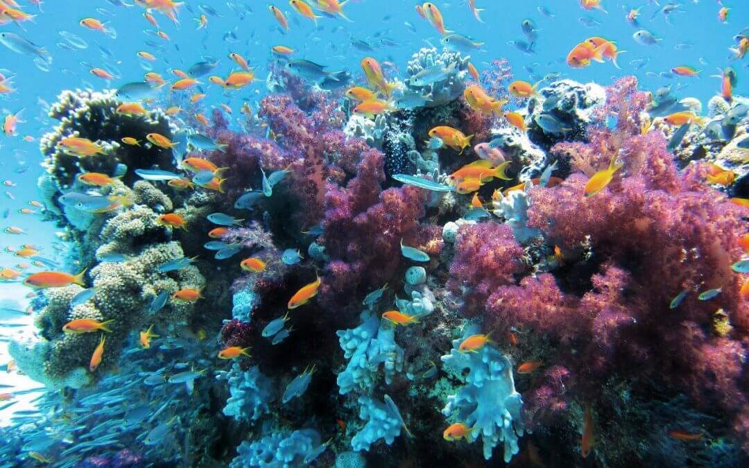 Krása a zkáza korálových útesů